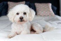 Vienotajā datubāzē reģistrēti jau 83 tūkstoši suņu