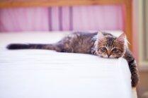 Gluži kā pēc svētkiem: nogurušo kaķu fotoizlase