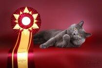 Latviešu runcis Tristans - viens no 11 skaistākajiem pasaules kaķiem