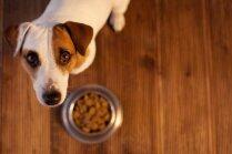'Dogo' sāga: Lai kaut viens pierāda, ka suņi nesaslima, uzskata biedrībā