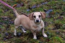 Trīs suņi kvadrātmetrā: dzīvnieku aizstāvjus pārsteidz necilvēcība Ulbrokā