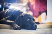 Slinkošanas rokasgrāmata: ko darīt mājās ar suni