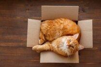 16 'kāpēc' par kaķi: atbildes uz jautājumiem, kas ir aktuāli daudziem