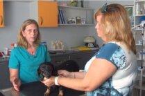 Video: Arī Latvijā nu pieejama adatu terapija dzīvniekiem. Vai efektīva?