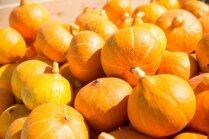 Lielāko ogu audzētāji – 40 šķirņu ķirbju plantācijas Tukuma novadā