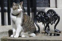 Britu premjeres rezidencē mītošais runcis Lerijs savainojis ķepu