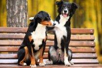 10 lietas, kas jāzina par obligāto suņu čipēšanu un reģistrēšanu
