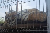 Latvietis Klaipēdas zoodārzu sauc par koncentrācijas nometni; atbildīgās iestādes bezspēcīgas