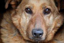 Dzīvnieku patversme aicina iesaistīties 'Senioru programmā' un atbalstīt vecākos mīluļus
