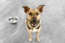 'Dogo' sāga: suņu slimības turpmāko pētījumu gatavs finansēt barības ražotājs