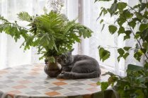 Pēc kādiem principiem kaķis izvēlas sev guļvietu