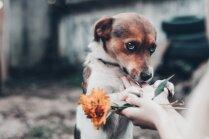 Mīts vai patiesība: suns izjūt vainas apziņu