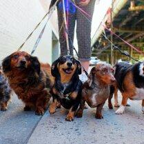Почему вам стоит позаботиться о нескольких собаках сразу?