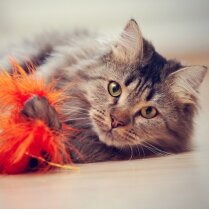 А у нас в квартире кот. Что надо знать, чтобы пережить его сезонную линьку