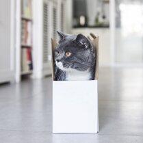ВИДЕО: Котик vs. Коробочка или Лучший способ напугать хозяев и напугаться самому