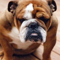 Не делайте так: 9 привычек, которые бесят вашу собаку