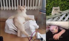 Поздравляем, товарищ, твой кот инопланетянин! (+16 фото и видео, доказывающих это)