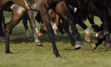 Biedrība: zirgu skaits Latvijā turpina sarukt; negatīvi ietekmē Krievijas rubļa svārstības