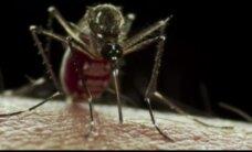 Zikas vīruss konstatēts arī Portugālē, Somijā un Vācijā