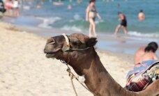 Ziemassvētkos iecienītākie ceļojumu galamērķi - Ēģipte un Kanāriju salas