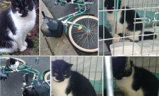 Melnbalta kaķenīte meklē jaunas mājas un mīlošu ģimeni