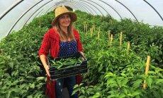 Pilsētnieku piparotā dzīve laukos: stāsts par uzņēmīgiem čili audzētājiem Latvijā