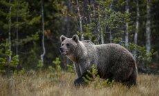 Посольство РФ предупредило главу британского МИДа о гуляющих по Москве медведях