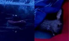 Трогательное видео: спасатели помогли косуле, провалившейся под лед на Гауе