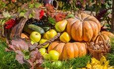 Kas jāpaveic dārzā līdz 2. novembrim?