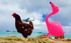 Мокрая курица. Как француз путешествует по миру на яхте вместе с несушкой