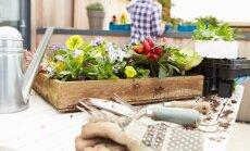 Dārzs uz jumta: kā to labiekārtot un kopt