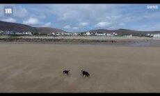 ВИДЕО: В Ирландии пропал пляж и вернулся спустя 33 года