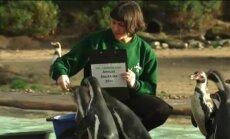 Video: Londonas zoodārzā norit ikgadējā dzīvnieku skaitīšana