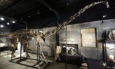 Dinozaura 'Mistijas' skeletu izsola par 400 000 sterliņu mārciņu