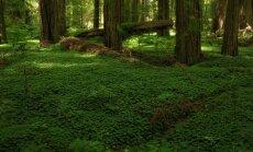 Aizputes novada mežā apmaldās trīs cilvēki
