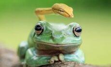 Foto: Iespējams, neparastākie draugi pasaulē – kokvarde un čūskulēns