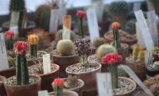 13. janvārī notiks izzinoša ekskursija Botāniskā dārza augu valstībā