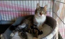 Dzīvnieku patversmē 'Labās mājas' nonācis neparasti daudz kaķēnu
