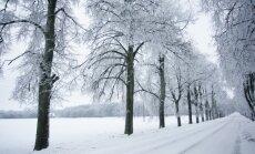 Американские синоптики прогнозируют Балтии холодную и снежную зиму