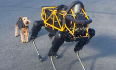 Video: Kā īsts suns reaģē uz robotsuni Spotu