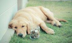 Suns nav bezmaksas! Cik daudz jāmaksā par mīluli lielākajās Latvijas pilsētās