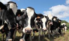 Piena nozare Latvijā attīstīsies, ja cenas saglabāsies stabilas, prognozē ZM