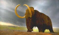 Šos zvērus mēs nekad vairs neredzēsim: 15 izmirušas sugas
