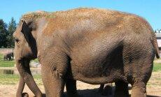 Zilonis Marokas zoo ar akmeni iemet meitenei pa galvu, viņu nogalinot