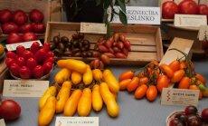 Foto: Ar erotiskiem nosaukumiem un dažādās krāsās – tomātu iznāciens Dabas muzejā