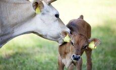 Zemnieku saimniecība 'Veckūkuri' šogad investējusi 200 000 eiro nišas produktu ražošanai