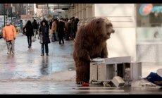 Video: Nikns lācis sabiedē ņujorkiešus