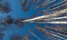 Во вторник в Латвии ожидается плюсовая температура