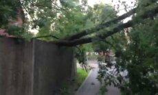 В Риге было приостановлено движение трамваев 1-го маршрута; на провода упало дерево