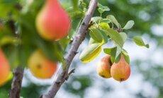 Стоимость импортированных фруктов и ягод в 2 раза превышает стоимость экспорта